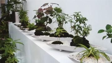 観葉植物専門店「デコファーム」