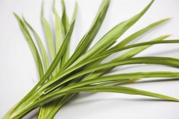 パンダンリーフはタコの木科の植物で、パンダナスなどとも呼ばれる。