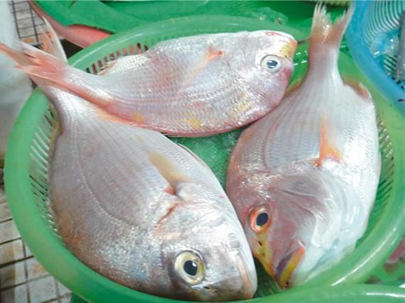 タイ Cá Tráp (Cá Hồng)
