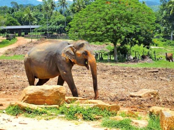 srilanka-3